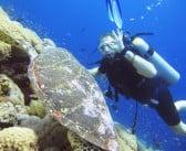 Tiran Island, Sharm El Sheikh, Egypt