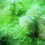 Great diving at Gildenburgh