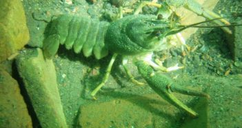 Gildenburgh good diving